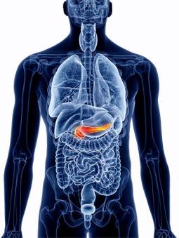 img-pancreas